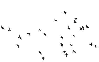 Las aves y los aviones ¿pueden las aves derribar un avión?