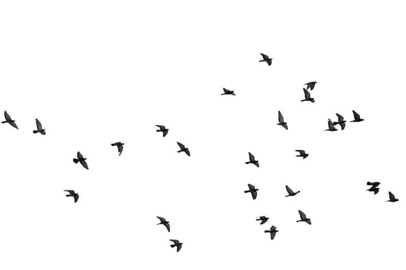 impactos de aves con aviones